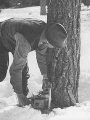 ▲1918年 W.Stugan社 林産業に進出